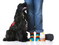 Service dog Stock Images