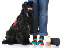 Service dog Royalty Free Stock Photos