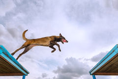 Service dog training Royalty Free Stock Images