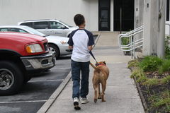 Service dog at work. Dog and boy in front of building Stock Images