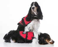 Service dogs Stock Image