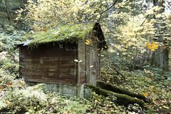 Service shed in an old growth forest preserve. Moss covered service shed along an old growth forest preserve trail - forest in fall colors royalty free stock image