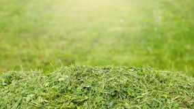 Services for lawn care, grass cutting in the garden and in the yard, banner with space for text. Services for lawn care, grass cutting in the garden and in the stock images