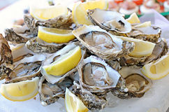 Serving of fresh oysters with lemon Stock Photography