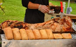 Serving hog pig roast Royalty Free Stock Image