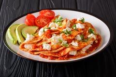 Serving Mexican Entomatadas with cottage cheese, tomato sauce, g royalty free stock photos