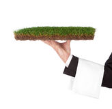 Serving nature. Waiter with a green tray. Organic concept Royalty Free Stock Photography