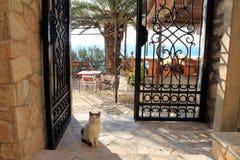 Servio el gato del guardia en la orilla de mar adriática en el graduado de Stari (Montenegro, Ulcinj, invierno) Fotografía de archivo