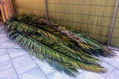 Servir cacher de schach de toits au sukkah Photographie stock