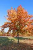 Servizio albero vero nei colori vibranti di autunno fotografie stock