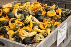 Servizio dei coltivatori delle zucche Fotografia Stock