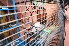 Servizio dei telefoni delle cellule sulla via africana Fotografia Stock