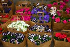 Servizio del fiore Fotografie Stock Libere da Diritti