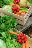 Servizio della verdura dell'azienda agricola Fotografia Stock Libera da Diritti