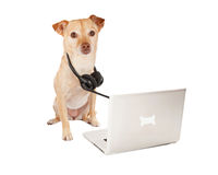 Servizio di cliente professionale del cane Immagine Stock