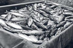 Servizio di pesci Fotografie Stock Libere da Diritti