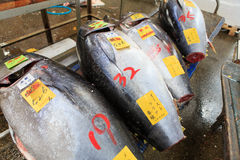 Servizio di pesci di Tsukiji Fotografie Stock Libere da Diritti