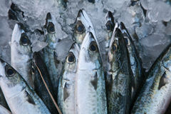 Servizio di pesci a Hong Kong immagine stock