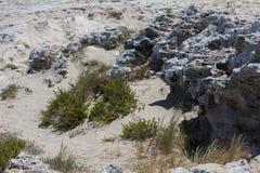 In Ses Illetes setzen Strand und Steine in Formentera auf den Strand Stockfotografie