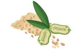 Sesam, zaden, fruit, blad, Vecctor-illustratie Royalty-vrije Stock Fotografie