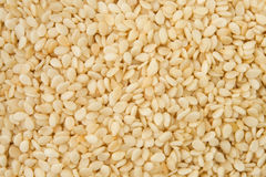 Sesame Stock Photography