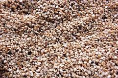 Sesame Stock Photo
