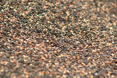 Sesame. Background of sesame royalty free stock images
