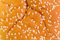 Sesame bun close up. Close up of sesame bun in abstract background Stock Images