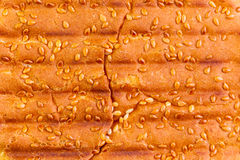 Sesame bun close up. Close up of sesame bun with grill marks in abstract background Stock Photography