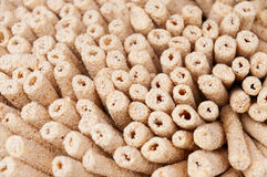 Sesame candy Stock Photography
