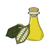 Sesame oil bottle, nuts, white in color 3 Royalty Free Stock Photo
