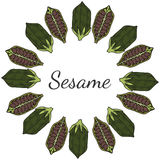 Sesame, Round frame in color 2 Royalty Free Stock Images