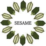 Sesame, Round frame in color 1 Stock Image