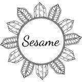 Sesame, Round frame 2 Stock Image