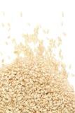 Sesame seeds. Isolated on white background Royalty Free Stock Photos
