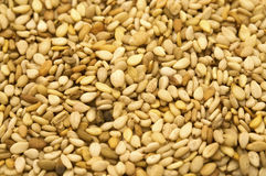 Sesame Seeds. Close shot of a group of sesame seeds (Sesamum indicum Stock Image
