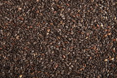 Sesame seeds backgrounds. Many pieces shells on clean Royalty Free Stock Image