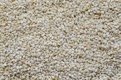 Sesame seeds close up background. White sesame seeds close up background stock photos