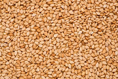 Sesame Seeds (Sesamum indicum) Royalty Free Stock Photos