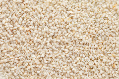 Sesame seeds (Sesamum indicum) background Royalty Free Stock Images