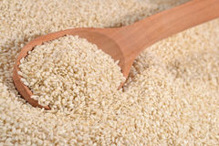 Sesame seeds in a spoon Stock Image