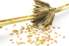 Sesame seeds and stem Royalty Free Stock Photo
