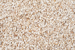 Sesame seeds texture Royalty Free Stock Images
