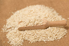 Sesame seeds Stock Images