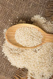 Sesame seeds in  a wooden spoon Stock Images