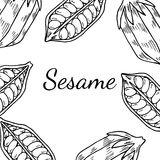 Sesame, Square banner. Sesame seed, natural organic butter ingredient. Treatment, care, food ingredient. Ink hand drawn sketch illustration. Square banner, card Royalty Free Stock Photo