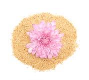 Sesamfrö och rosa dahlia Fotografering för Bildbyråer