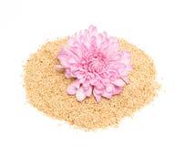 Sesamfrö och rosa dahlia Arkivfoto