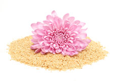 Sesamfrö och rosa dahlia Royaltyfria Foton