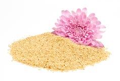 Sesamfrö och rosa dahlia Arkivbilder